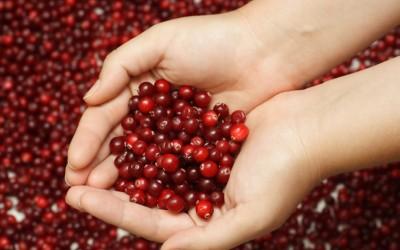 Treating Bleeding with Homeopathy